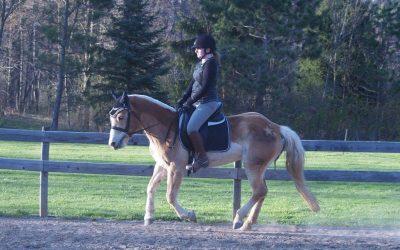 Post-Equine Affaire Motivation