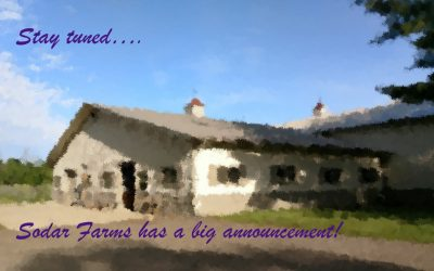 We have some BIG NEWS!!