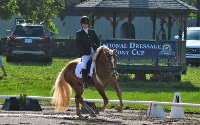 Stellar TVR at the National Dressage Pony Cup
